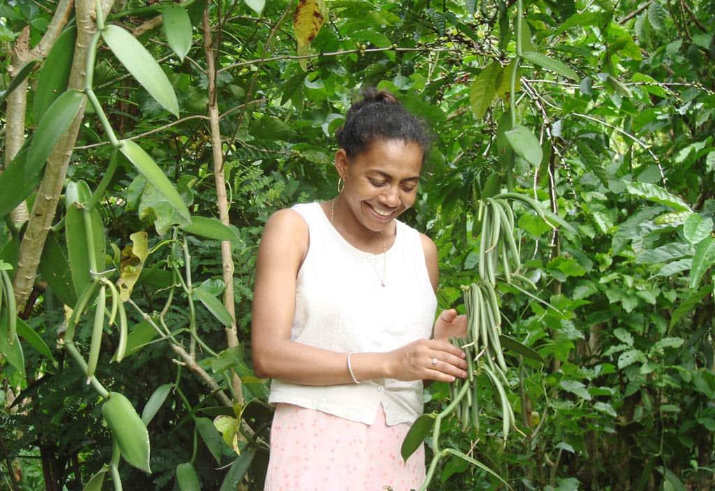 Madagascar del nord la terra della vaniglia