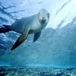 alonissos foca
