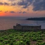 vigne_di_pantelleria
